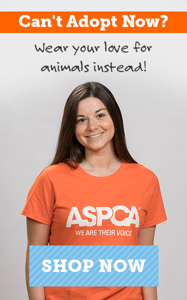 Can't Adopt Now? Wear your love at our store!