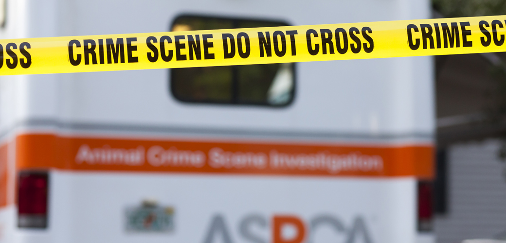 Anatomy of a Crime Scene