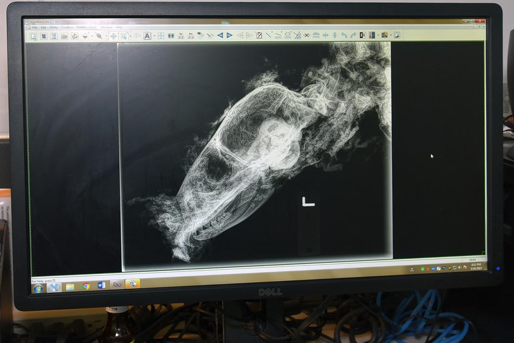 analyzing skeletal remains