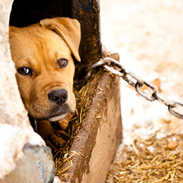 animal cruelty dog fighting puppy mill hoarding aspca dog fighting