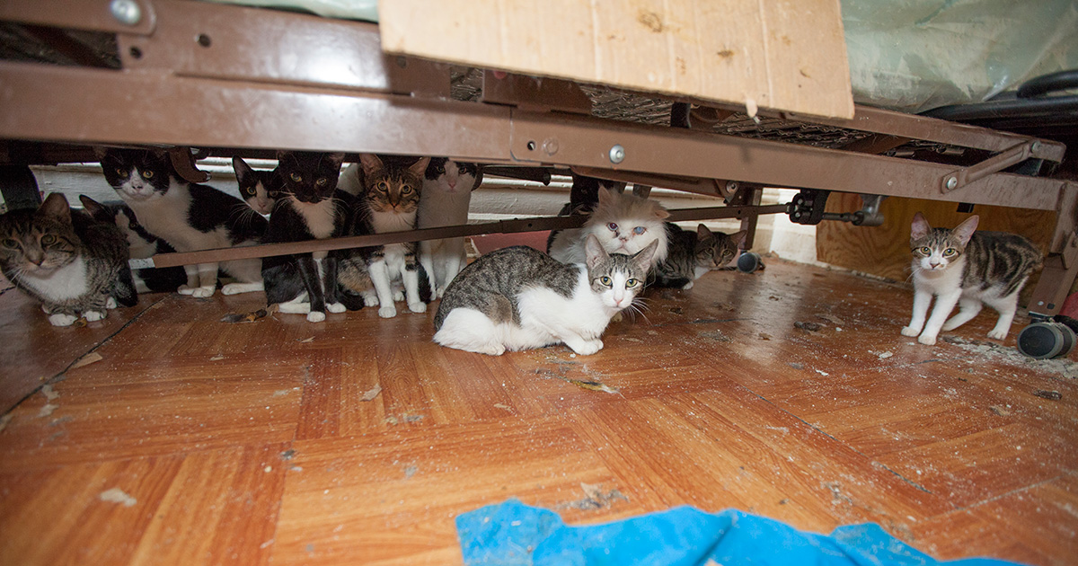 the issue of hoarding animals Animal hoarding animal hoarding facing their real issues may be too difficult for them compulsive hoarding and the meaning of things.