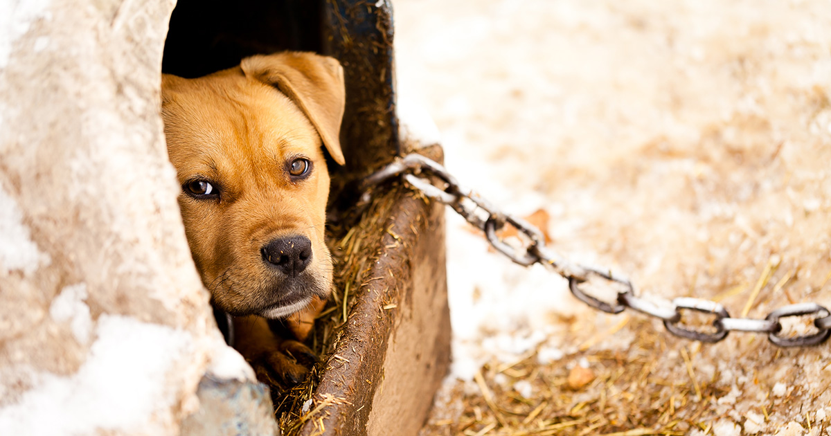 the criminal underground world of dog fighting aspca