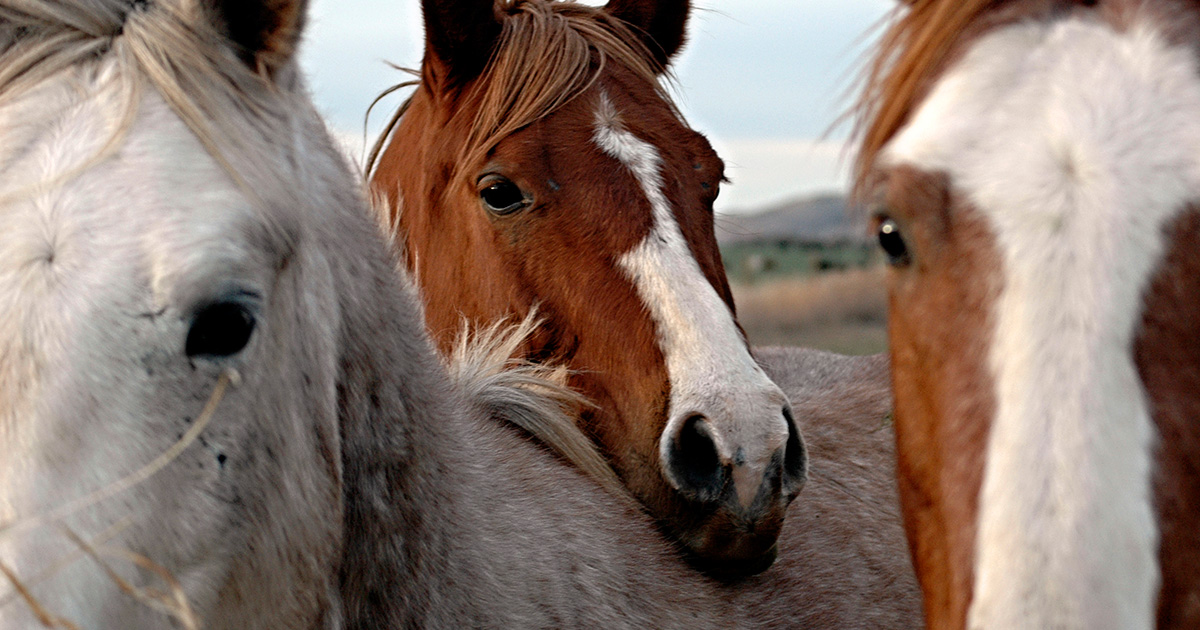 horse slaughter is not euthanasia learn more aspca