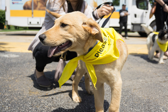 Animal Planet Teams Up With the ASPCA to Find Homes for 2,000+ Pets