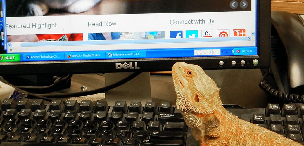 a lizard near a computer