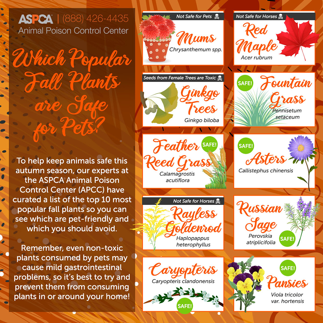 fall plants graphic