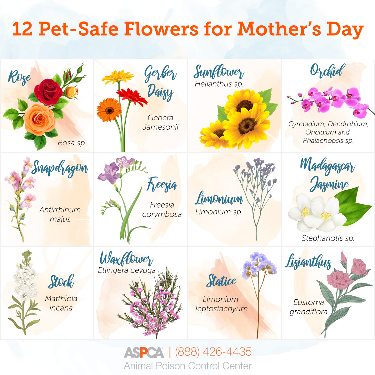 flower pet safety infographic