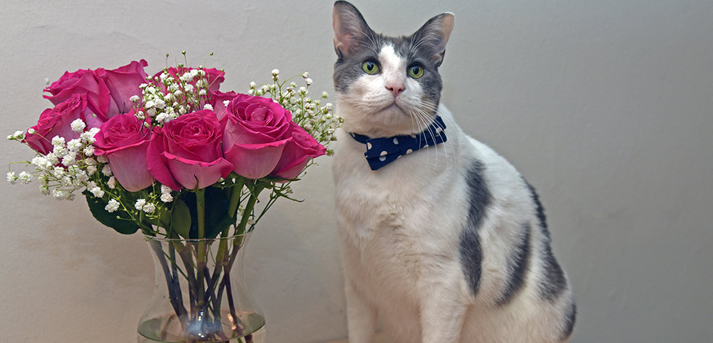a cat next to flowers in a vase