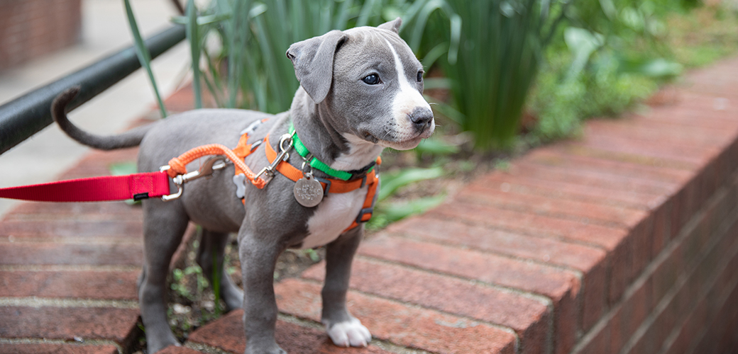 a gray puppy standing on a brick raised garden bed