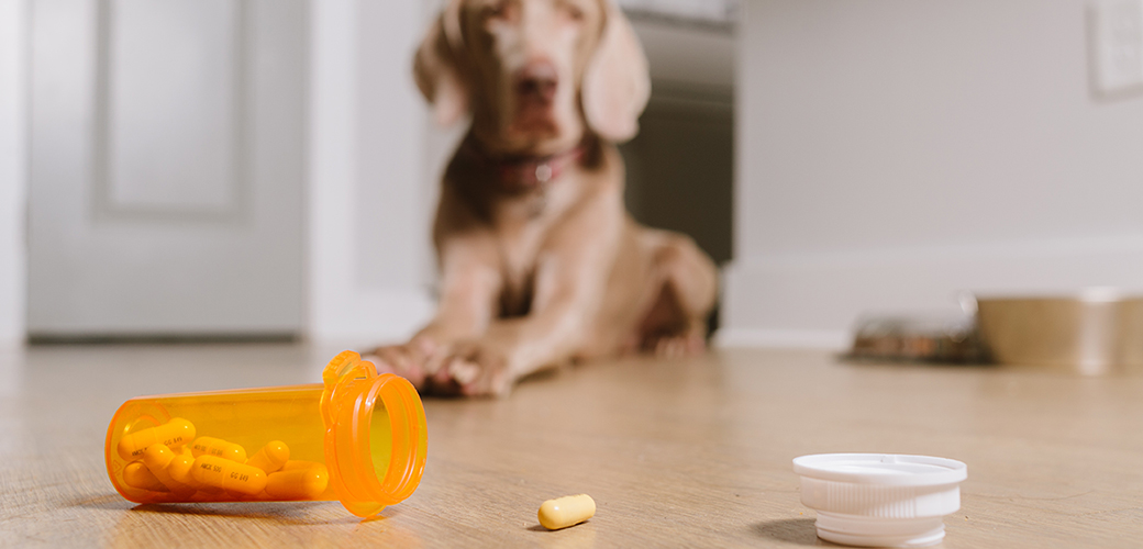 a dog looking at a pill bottle on the ground