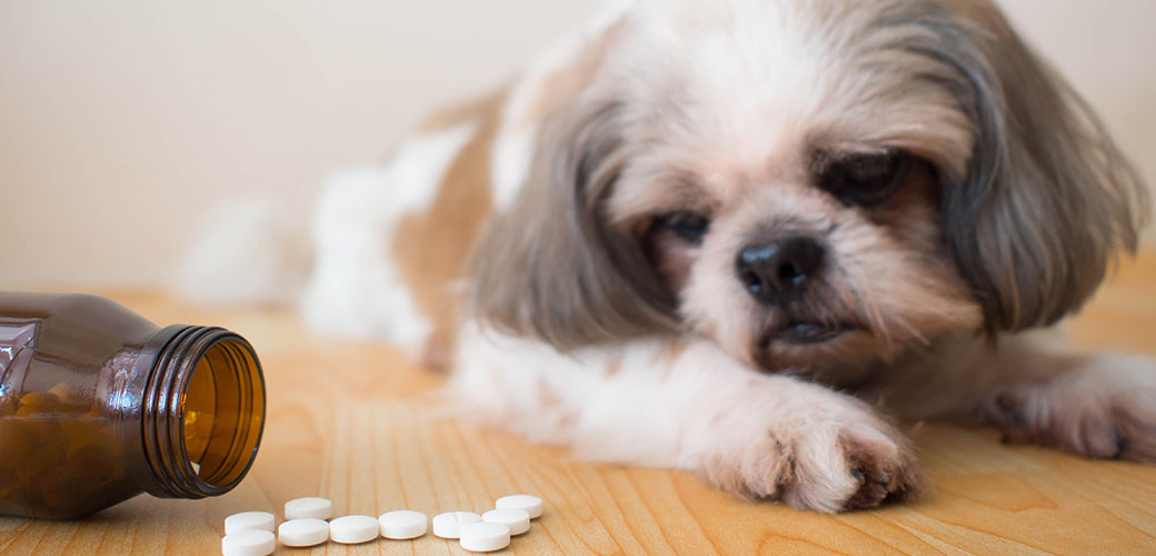 a small dog looking at pills on the floor