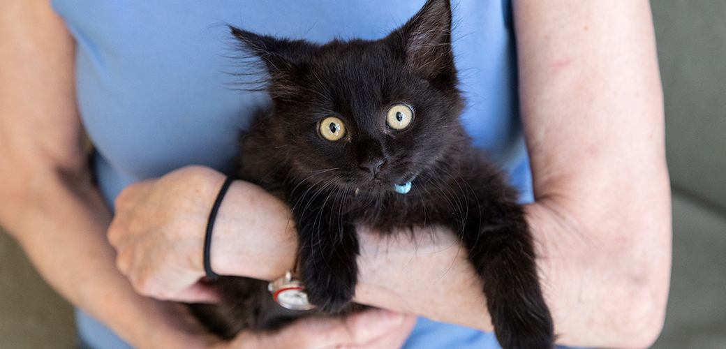 a black kitten being held by a woman in a light blue shirt