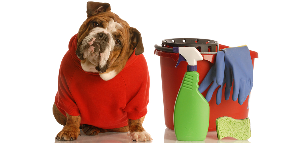 Poisonous Household Products | ASPCA