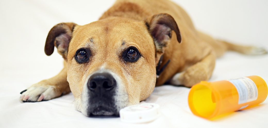 Announcing the Top Pet Toxins of 2015