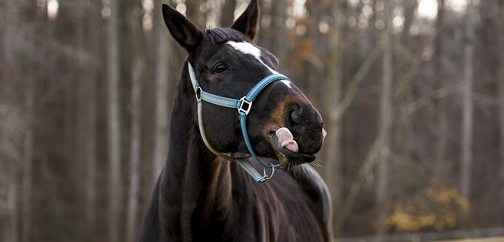 a horse licking his lips