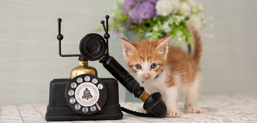 a kitten next to a rotary phone