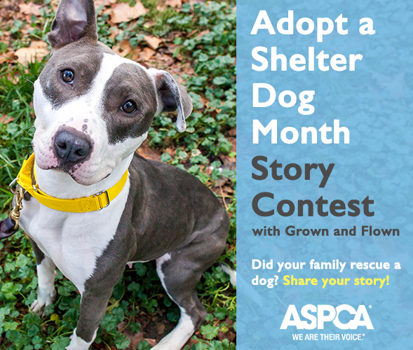 Adopt a Shelter Dog Month Story Contest