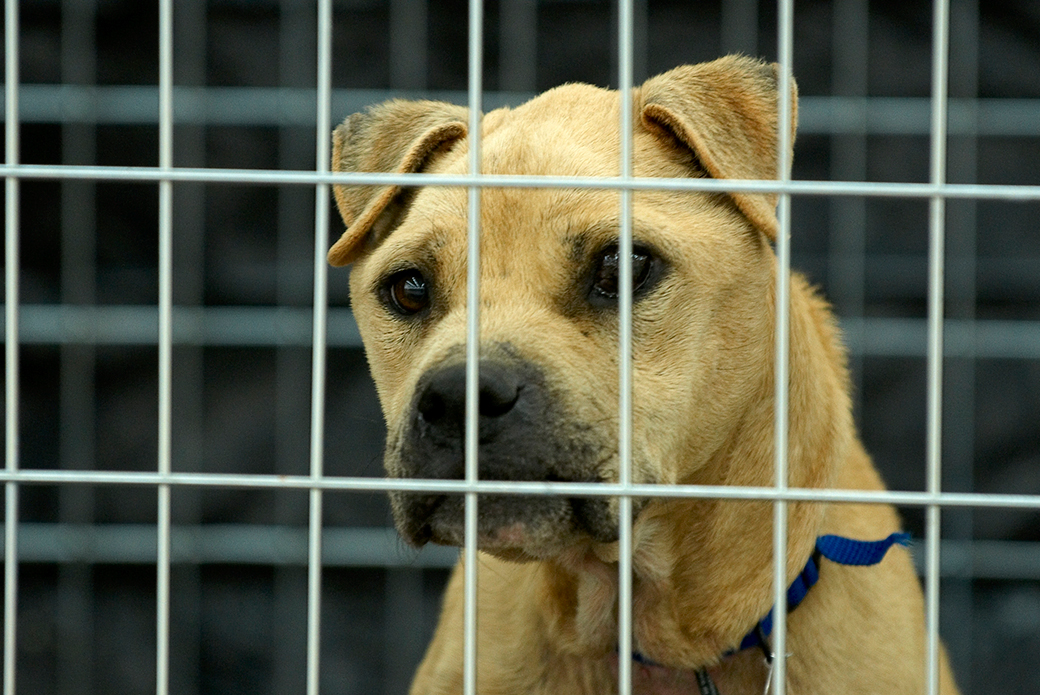 The ASPCA assists in the Michael Vick  federal investigation