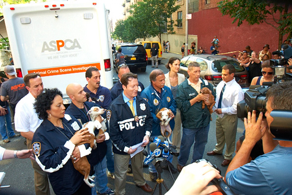 NYPD and ASPCA Bronx Dog Fighting Bust