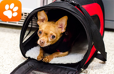 Disaster preparedness aspca the must have app for pet parents publicscrutiny Gallery