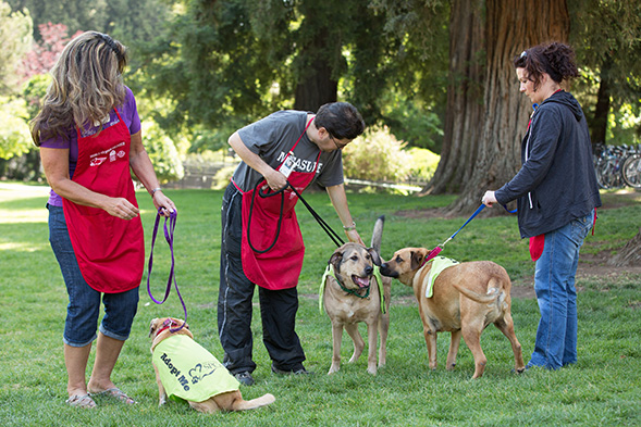 The ASPCA Brings Adoptable Pets Directly to the California Legislature for Paws for Celebration!