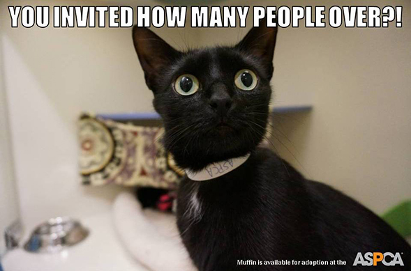 In NYC for Thanksgiving? Don't Miss Cat Friday at the ASPCA Adoption Center!