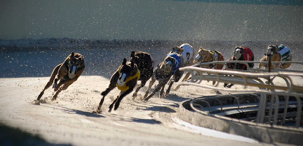 ASPCA & GREY2K USA Release National Report on Greyhound Racing