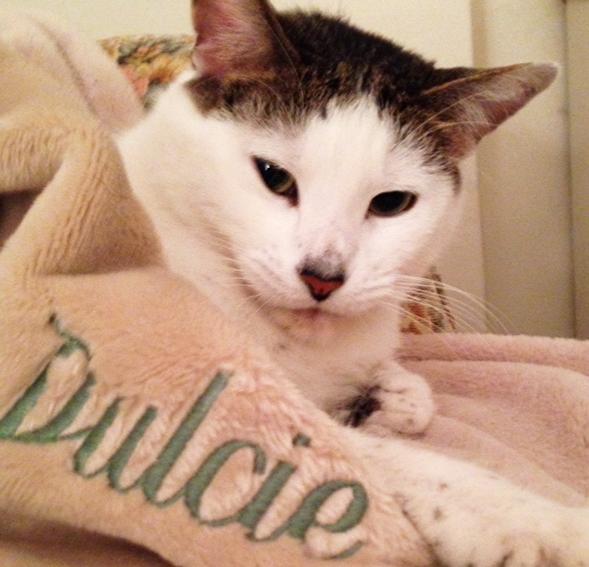 ASPCA Happy Tails: A Sweet Life for Dulcie