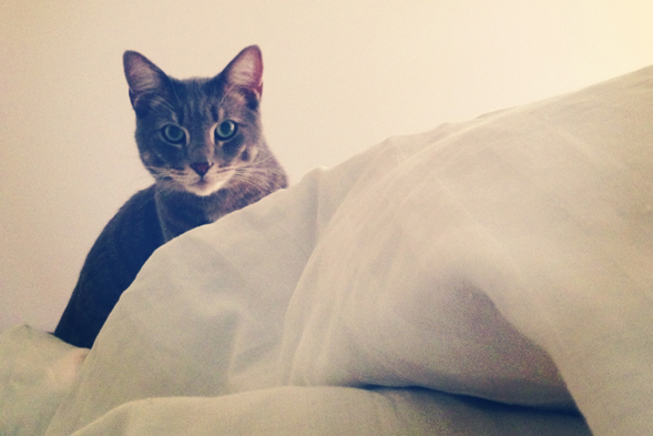 Cat looking out over a pile of blankets