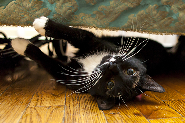 Black and white cat laying on her back