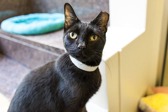 ASPCA Happy Tails: Bronte and Macaroni