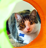 ASPCA Happy Tails: Budding Love