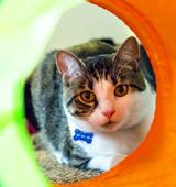 ASPCA Happy Tails: Budding Love