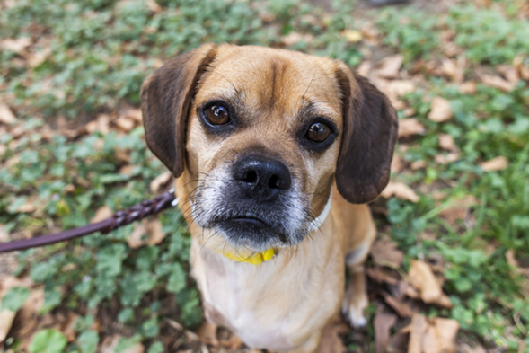 ASPCA Happy Tails: Finch Finds a Family