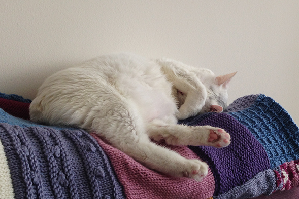 White cat with pink paws taking a nap