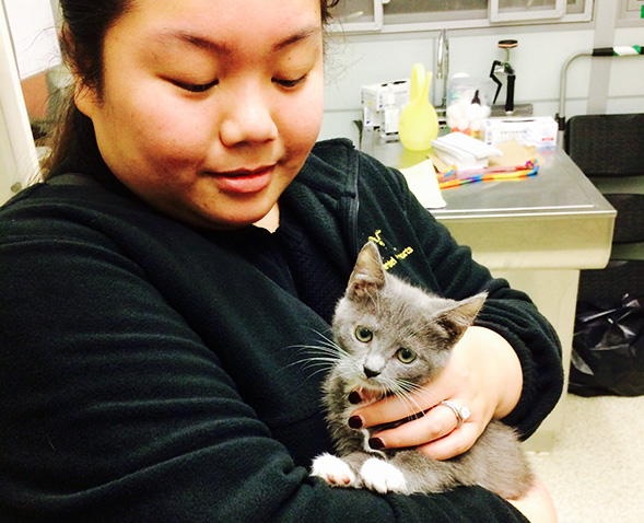 Young woman holds grey and white kitten