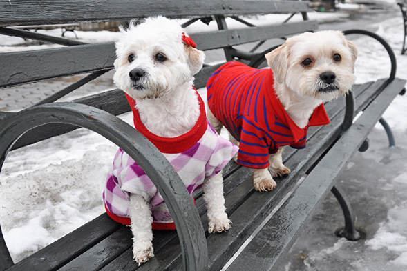 Two white dogs sitting on a park bench