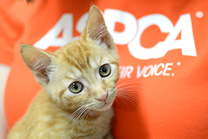 The ASPCA Leaders Council