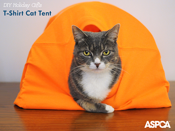 ASPCA Parents Holiday DIY Series: Create a Cozy Cat Tent