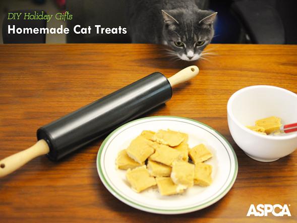 ASPCA Parents Holiday DIY Series: Homemade Tuna Treats for Cats
