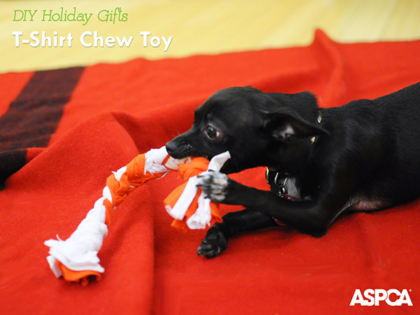 ASPCA Parents Holiday DIY Series: Learn to Make a T-Shirt Dog Toy