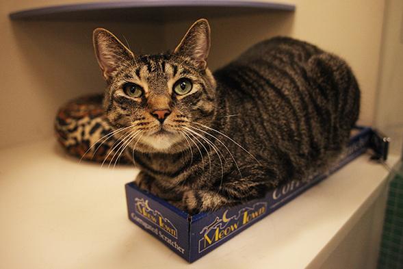 ASPCA Pet of the Week: Alley