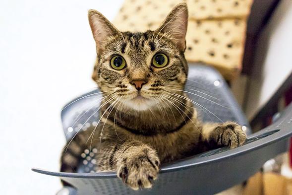 ASPCA Pet of the Week: Bernadetta