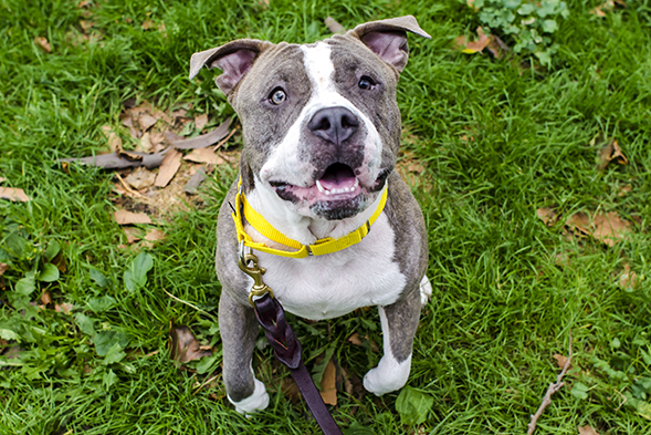 ASPCA Pet of the Week: Gracie