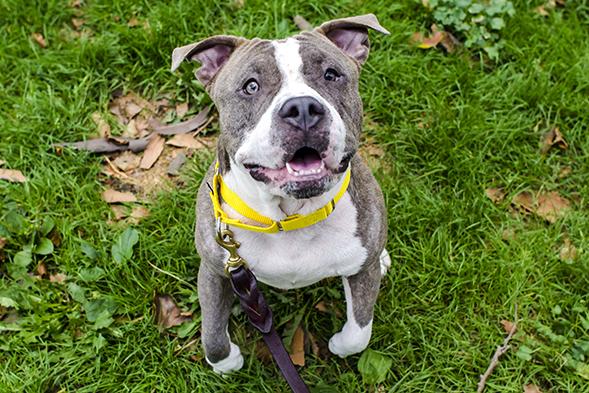 ASPCA Pet of the Week: Gracie