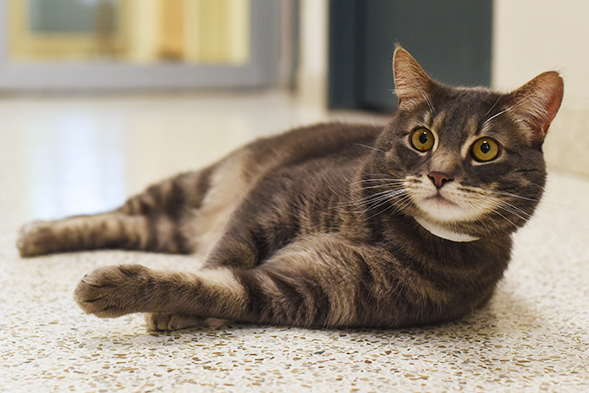 ASPCA Pet of the Week: Junior