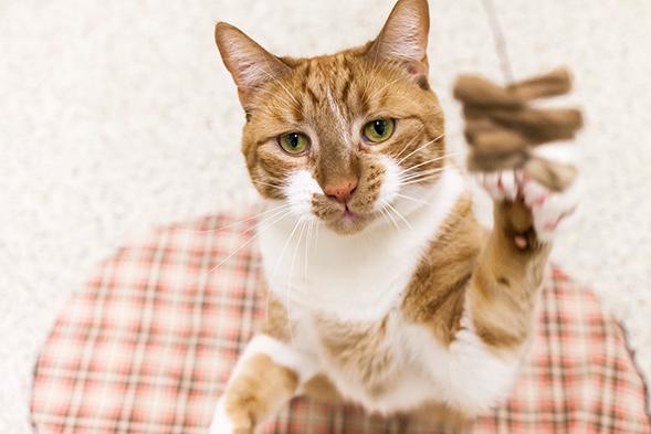 ASPCA Pet of the Week: Matthew