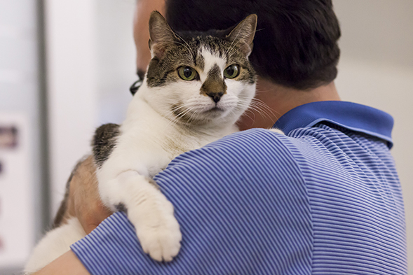Brown and white cat being held