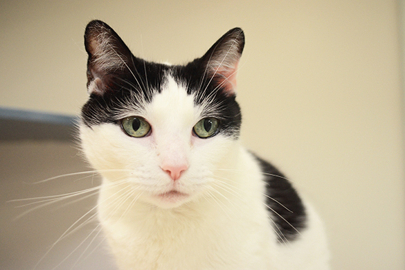 Black and white cat with green eyes