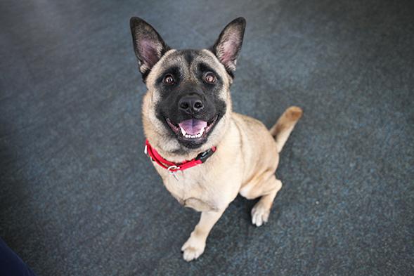ASPCA Pet of the Week: Bear